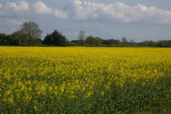 The english countryside is beautiful in the spring.